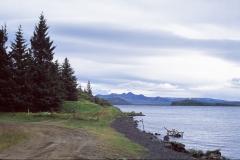 es gibt tatsächlich Bäume auf Island