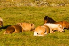 pferde2014-1